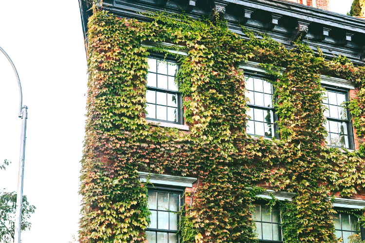 Fassadenbegrünung